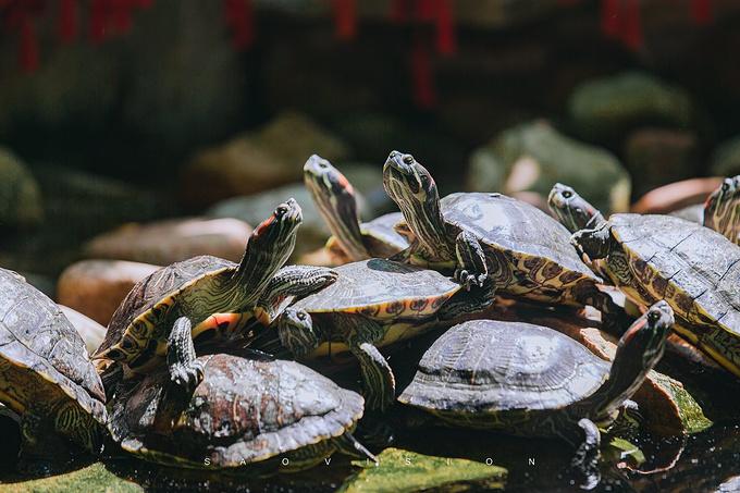 西霞口神雕山野生动物园图片