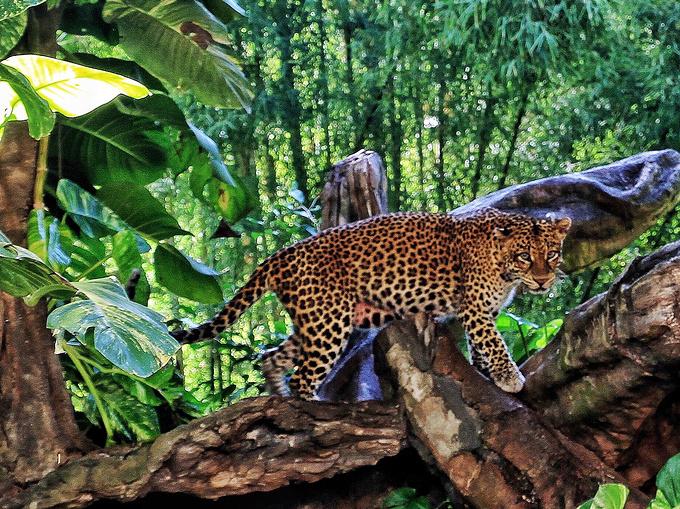 巴厘野生动物园图片