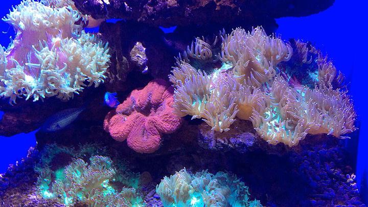 与珊瑚相映成趣,共同构成了一个神奇莫测,绚丽无比的海底花园