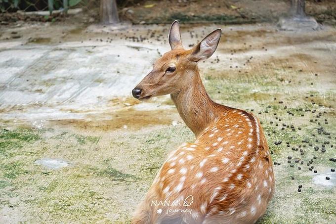 三亚彩色动物园图片