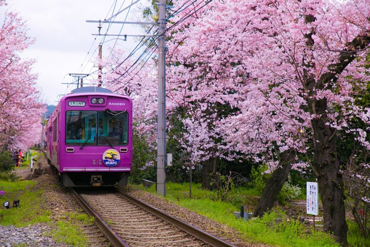 火车后,我觉得我刚刚的照片完全没有办法体现我被那种唯美的氛围震撼
