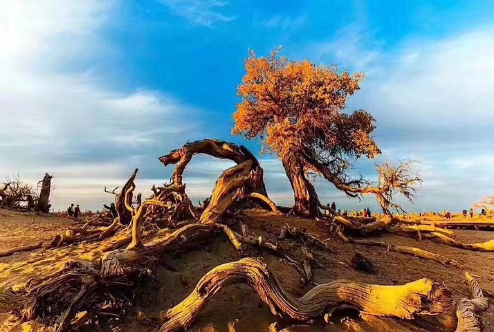 路70公里处,是新疆观赏胡杨林最佳地点之一,也是世界上1200个森林公园
