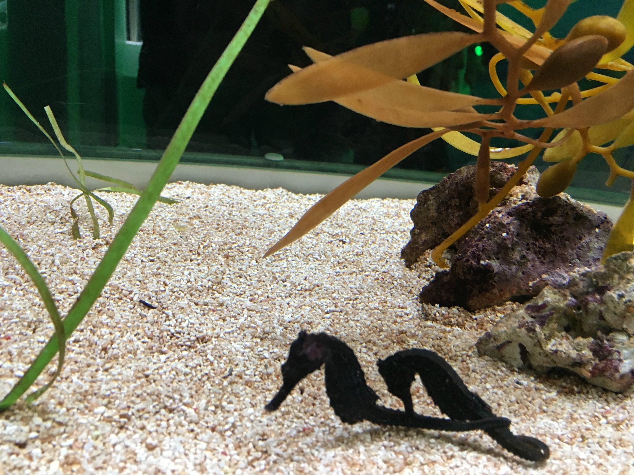 11天)  这样的设计很不错,既能看到动物们在水中的姿态,又能看到水面