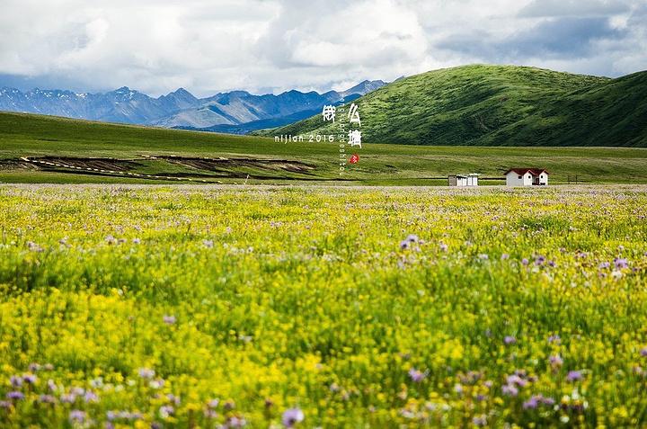 红原县内草场辽阔,牧歌,帐篷,牛羊星罗棋布,是美不胜收的人间天堂.图片