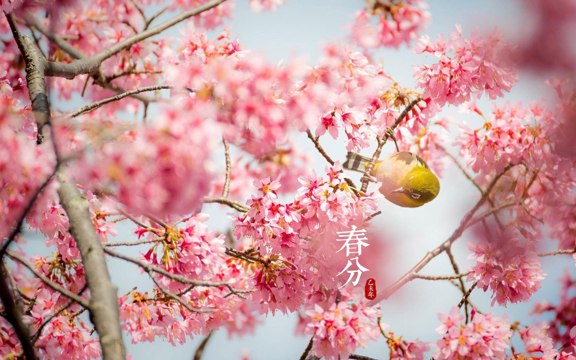 2018春分赏花指南!带上全家老小一起去踏春赏花(内含春分时节赏花注意事项)
