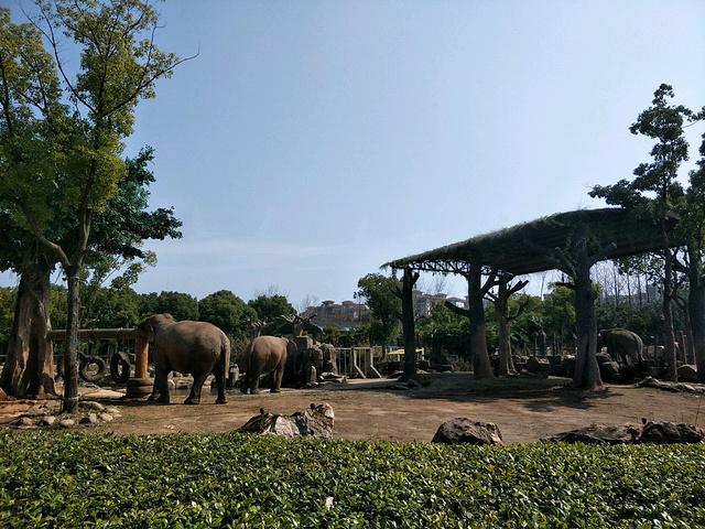 """更有诸多特色的动物行为展示和互动体验呈现_上海野生动物园""""的评论"""
