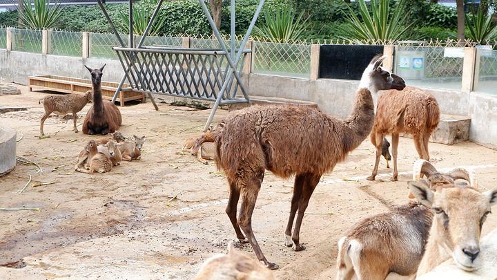 """广州动物园""""的评论图片"""