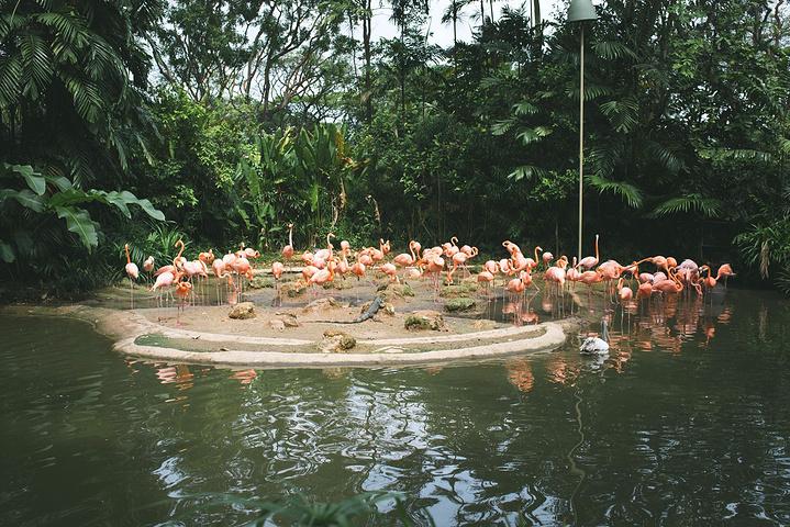 其实 合川 生态园也是有动物的,我们只玩了飞禽公园.