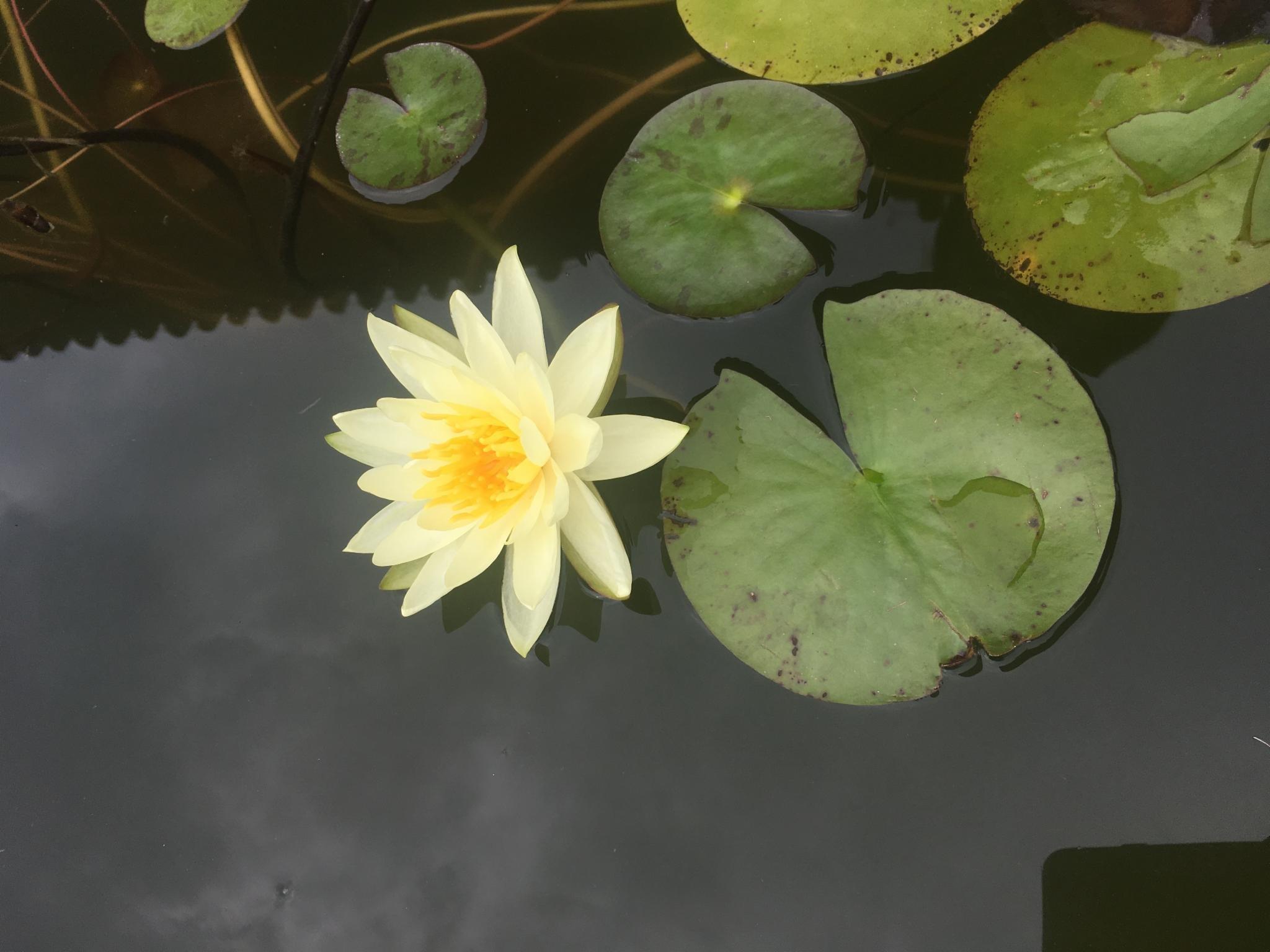 随心的辽西之旅——锦州、阜新古迹探寻