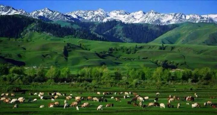 """又名巩乃斯草原,突厥语意为""""白阳坡。 在新源那拉提镇东部,距伊犁新源县城约110.0公里,位于那拉提山北坡,是发育在第三纪古洪积层上的中山地草原。 到那拉提的这一天阴天,而且下着小雨,所以景色看起来大打折扣,别人拍到了草原是这样子的"""