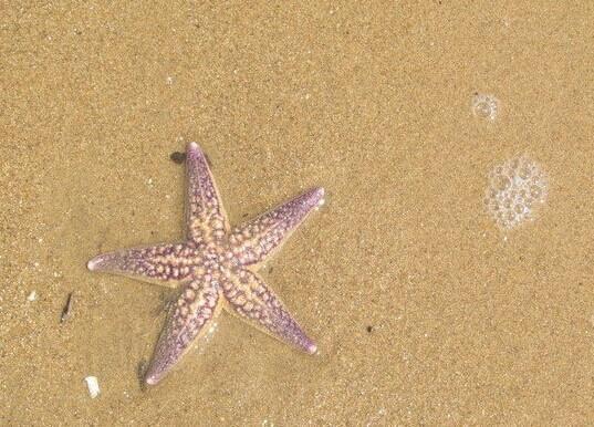 海边玩沙子_乐乐简笔画