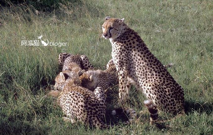 野生动物保护区图片