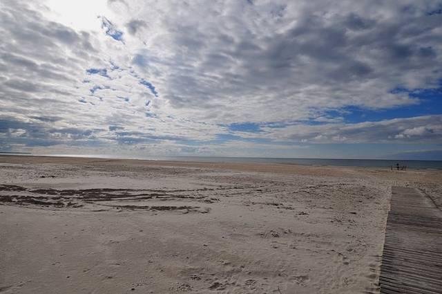 小石子,撅了一刻钟后我彻底放弃了,就连在海滩上跑步遛狗的大叔都朝我
