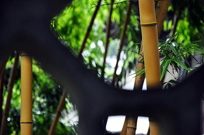 攻略福州之姑苏亭_苏州旅游写意沧浪到大理旅游攻略自由行图片