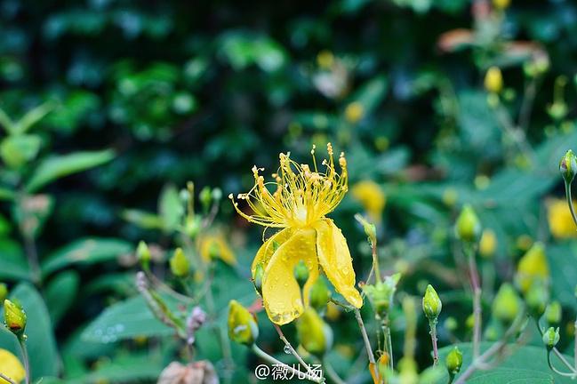 惠山国家森林公园图片