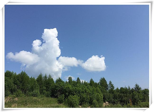 偃(yǎn)松景观林栈道,空气中一阵兴安岭的树林味道,我们沿着栈