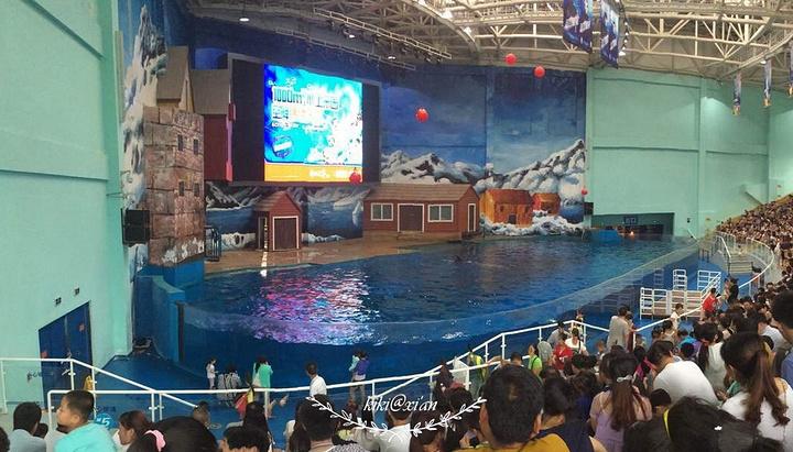 2016海洋馆和极地馆,年卡都用_曲江海洋v极地攻略东江湖图片