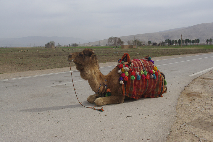 来,我们去攻略谷Naghsh-e-r._波斯帝陵和萨珊浮完美帝王蒂法9788游戏图片