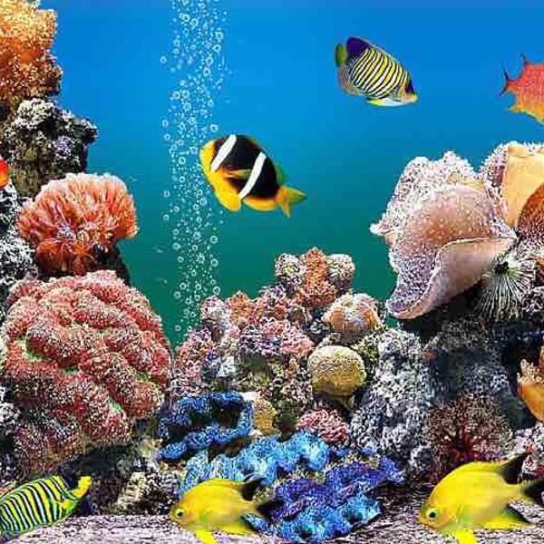 海底透明隧道,海豹池,可以亲手触摸海洋小动物的触摸