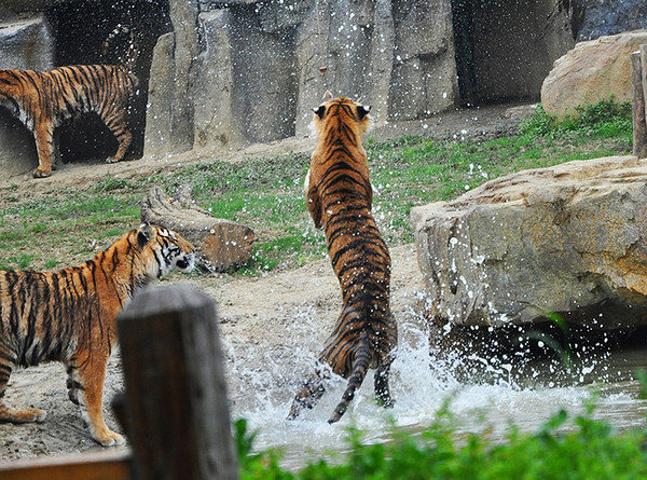 """""""常州淹城野生动物园位于美丽富饶的长江金三."""