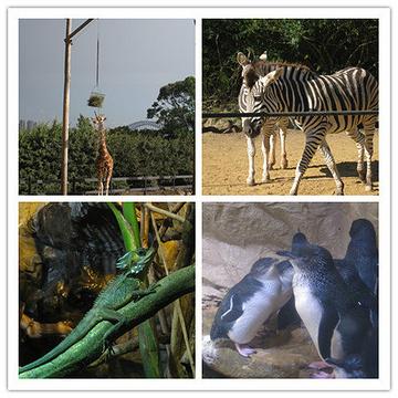 塔隆加动物园