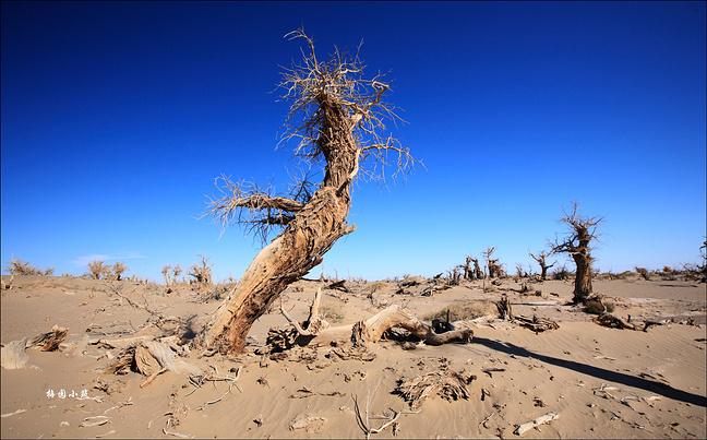 不知道如此孤独的一棵树在这样的荒漠中间是如何存活