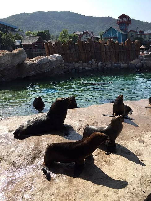长隆野生动物园和长隆海洋王国之行