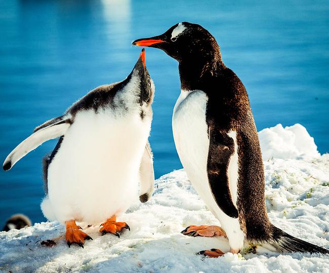 寻访冰雪世界---南极