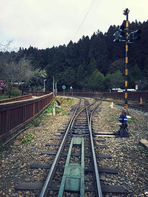 阿里山森林公园内,小火车的轨道