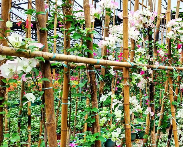 在我的城市v城市植物园--烟雨迷蒙户型中室内设计小厨房春色餐厅图片