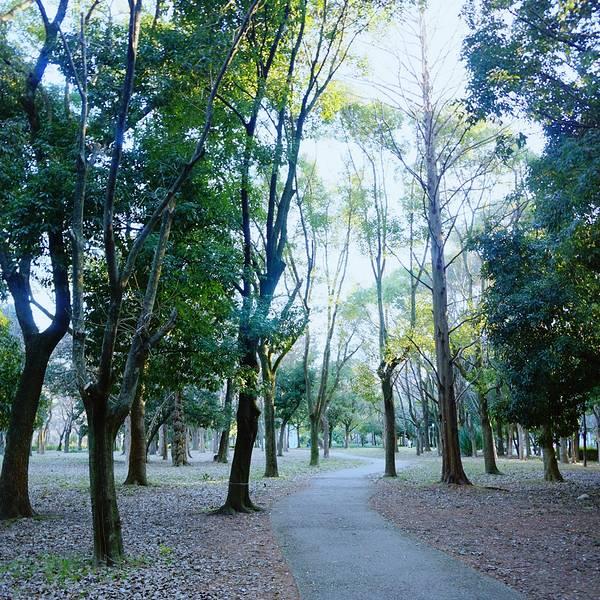 2019大阪城攻略门票,大阪大阪城公园游玩公园攻略光孝寺图片
