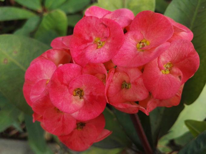 攀枝花的花朵就是那么的张扬,高调和艳丽