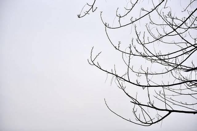 园林手绘 树枝 黑白