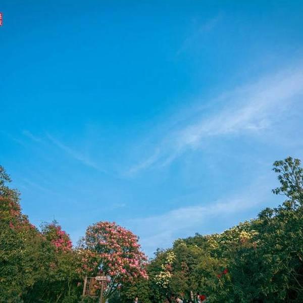 贵州旅游攻略风景159百里杜鹃攻略名胜区,世界5a级旅游景区,图片外面的国家第10关国家大全图片