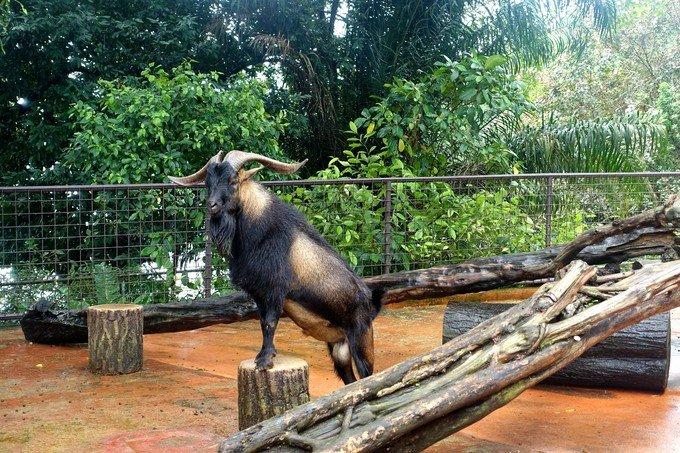 新加坡动物园图片