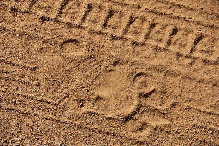 狮子的脚印,好一阵鸡冻······可惜搜寻半天还是无功而返
