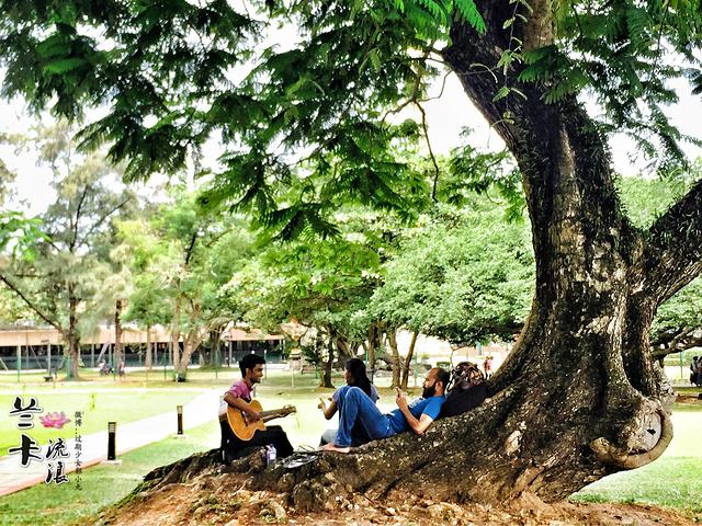 """""""这座科伦坡最大的公园_维哈马哈德维公园""""的评论图片"""