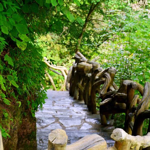黎坪国家森林公园旅游攻略