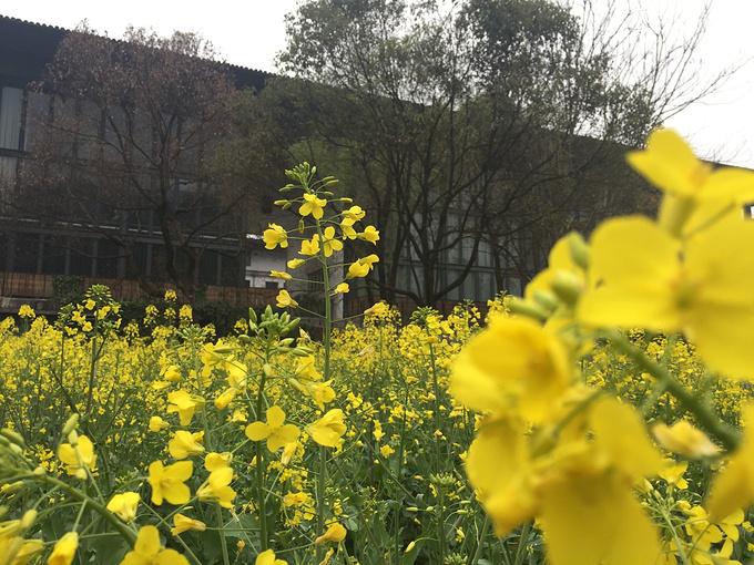 【周末去杭州】感受南方的春天,遇见王澍