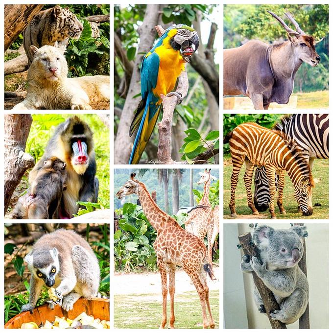 长隆野生动物园:中国最大的野生动物园