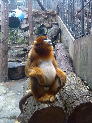 杭州动物园顶级笼舍给了黑猩猩,地盘最大,风景最美,可是它们就是在
