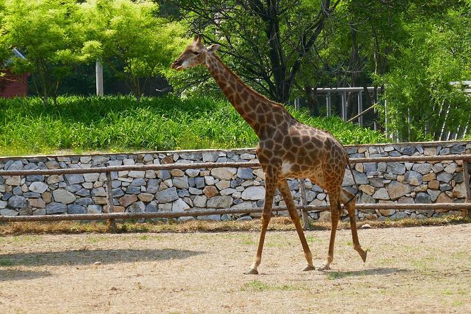 北京野生动物园1日游