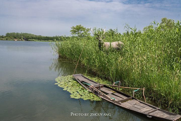 溱湖湿地风景区位于中国著名的三大洼地之一的里下河地区,古长江与