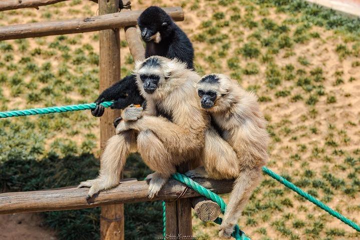 """西霞口神雕山野生动物园""""的评论图片"""
