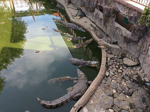 北榄鳄鱼湖动物园儿童票,¥21起  关于北揽鳄鱼湖公园 北榄鳄鱼湖