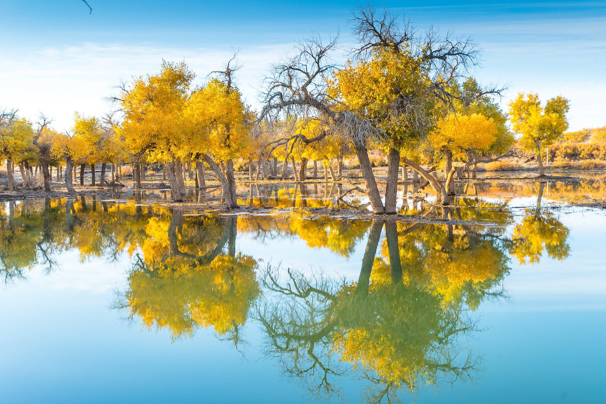 西北壮行,三千年胡杨林秋的守望,奔袭巴丹吉林大漠奇缘