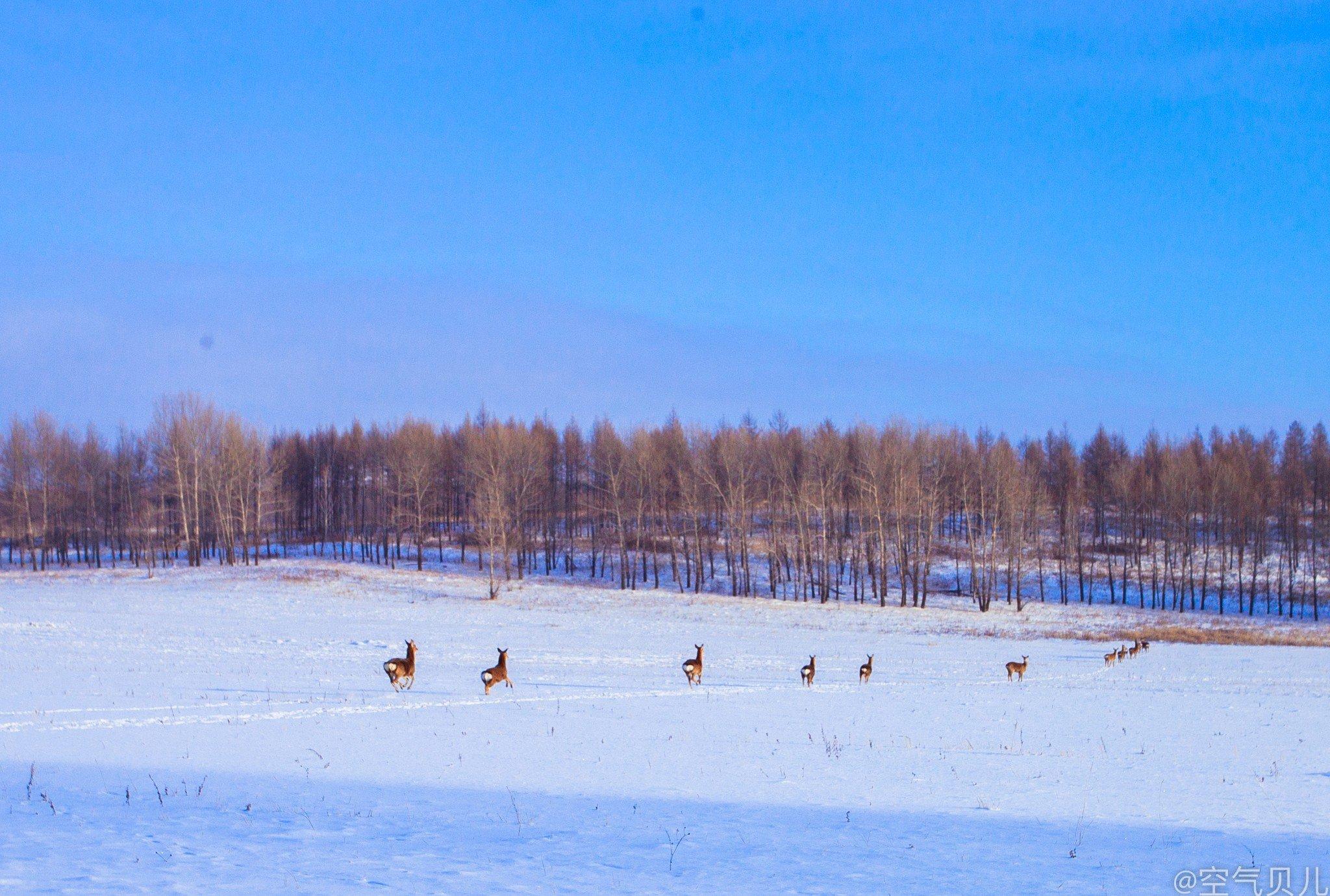 冬季内蒙来看雪,呼伦贝尔一个南方孩子的北国梦
