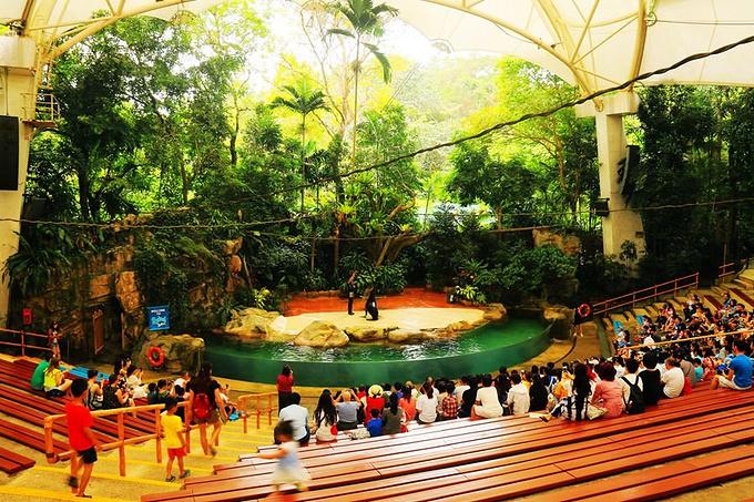 新加坡日间动物园 新加坡植物园 金沙酒店空中观景台 图片