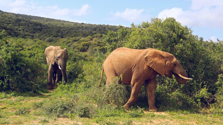 南非的春天  他的治安或许堪忧,但景色绝不会让你失望