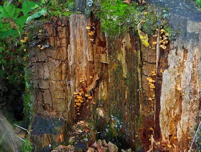 一颗枯树上面长满了小蘑菇